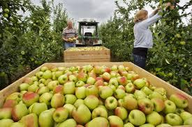 plukken van appels