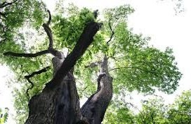 kabouterboom in beek-ubbergen bij nijmegen