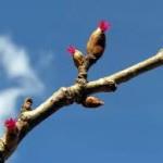 vrouweloijke bloempjes
