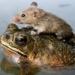 kikker en muis