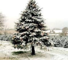 Voor natuurlijke kerstsneeuw kunnen we niet zorgen, wel voor smakelijke recepten
