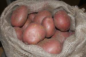 blauwe aardappels