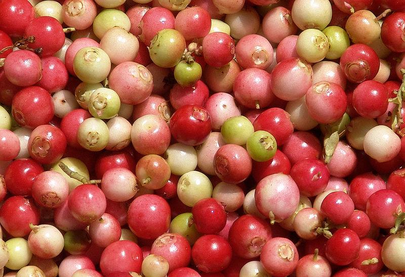 appel abrikozen compote
