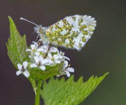 vlinder op look zonder look