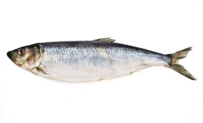 haring vis
