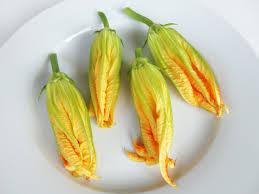 mannelijke courgettebloemen