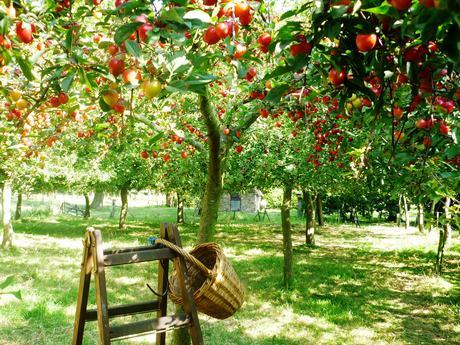krozenboomgaard in Boven Leeuwen