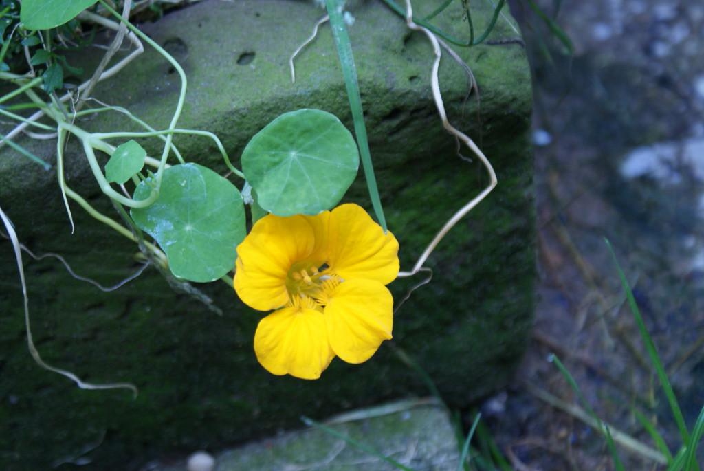 bloem oikers