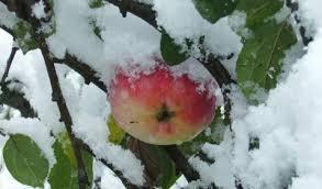sneeuwappel