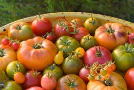 tomaten in vele soorten