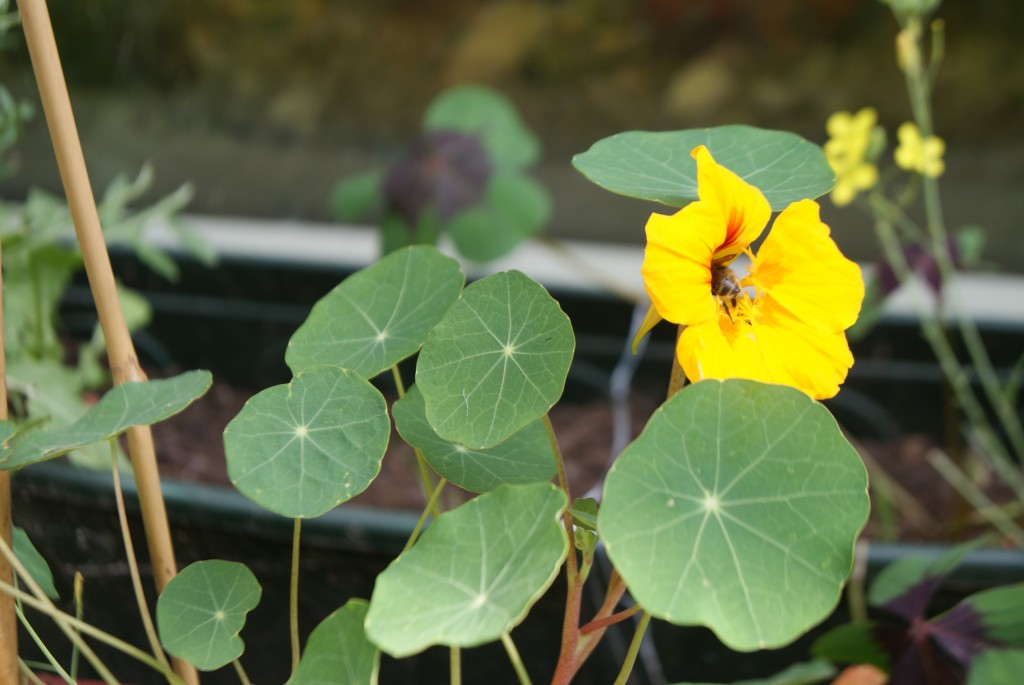 NEDDIS OI KERS tuin 2016