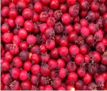 vruchten krentenboompje