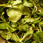 waterkers ideaal voor een pittige salade