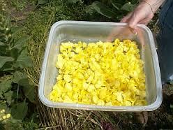 verzamelde bloemblad