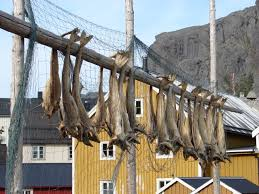 stokvis in noorwegen