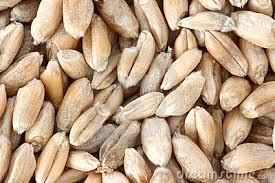 rogge als graan