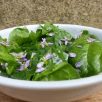 groene-pinksterbloemsalade