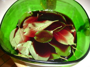 ingelegde kriekbladeren in kersenbrandwijn