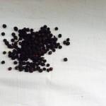 Neddis zwarte peper